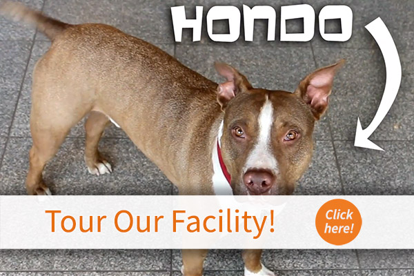 Meet our greeter, Hondo.